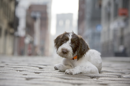 Cute puppy in the street