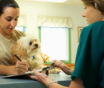 Dog at veterinary receptionist's desk