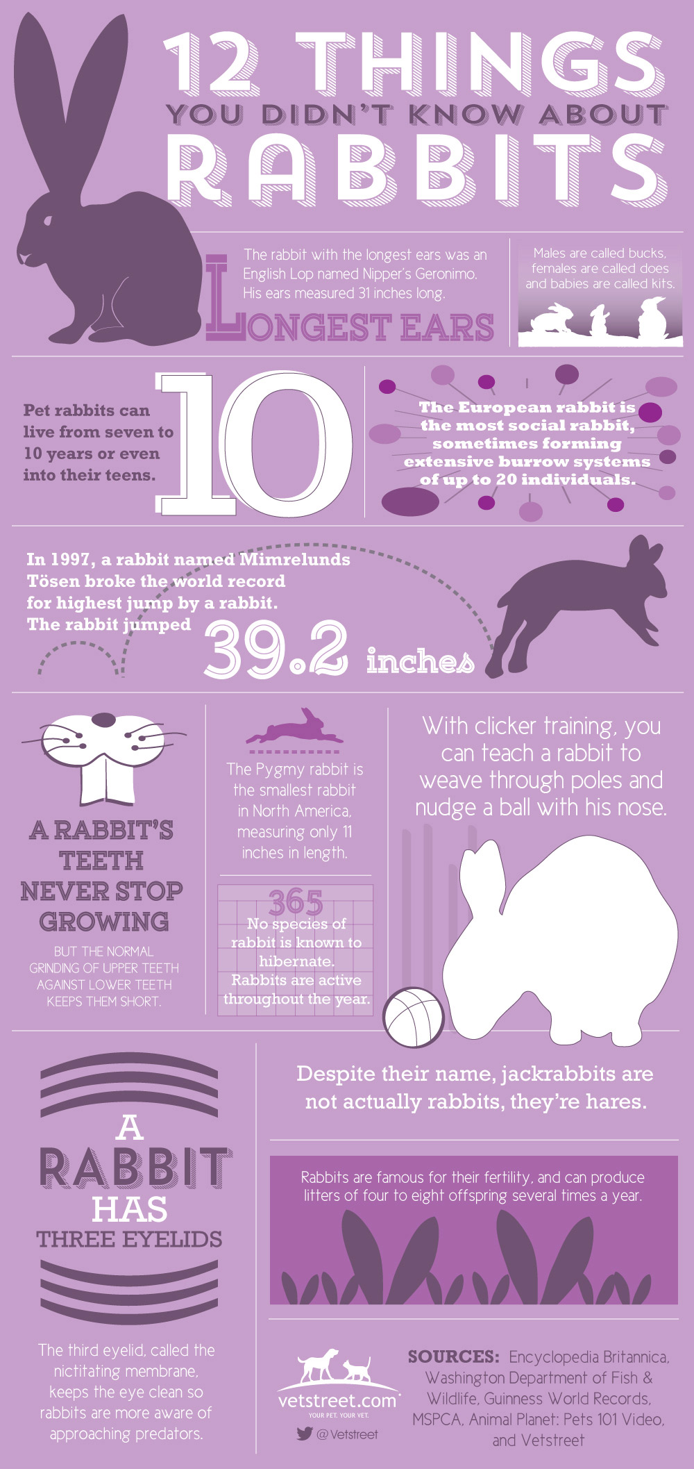 Easter Infographic: 12 Things You Didn't Know About Rabbits
