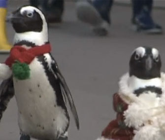 A group of six penguins dressed as Santa's helpers parades through a Tokyo aquarium.