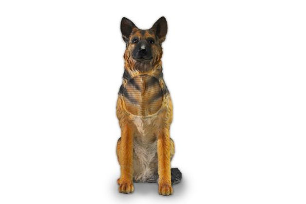 German Shepherd Dog Speaker