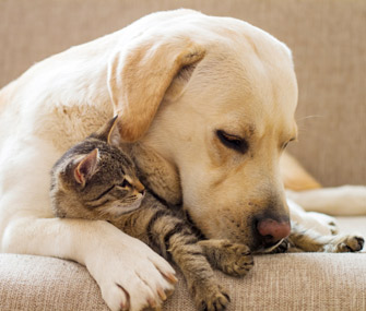 How To Train Your Dog To Get Along With Cats