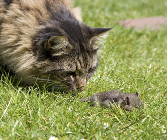 Do Cats Really Eat Mice