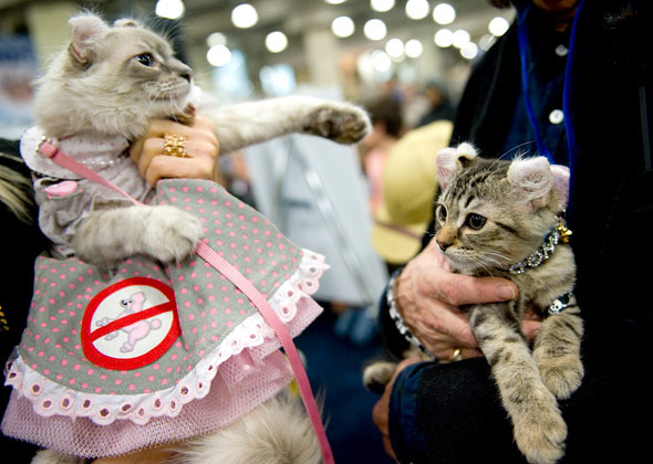 Chic Cats at Meet the Breeds Cat Fashion Show