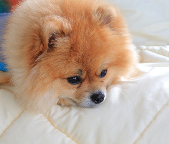 Vomiting and diarrhea are the most common signs of gastrointestinal upset in cats and dogs