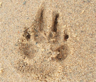 Unger shared this photo of a paw print in the sand with the news of Schoep's death.