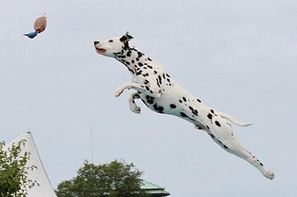 Lance Jumping
