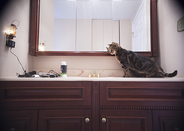 Things in the Home That Scare Pets Electric Razor