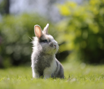 Cute pet rabbit
