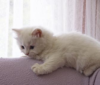 Energetic Kitten