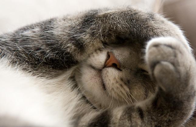 Hide and Seek Cat Covering Eyes