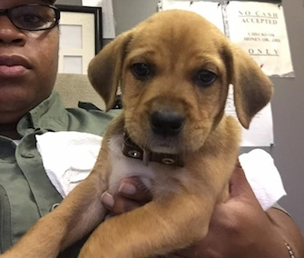 An animal control officer rescued a puppy from a trash can in Tennessee.