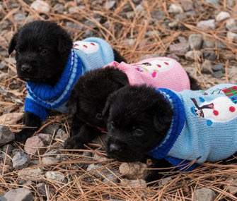 Dumpster Puppies
