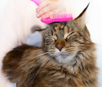 Cat getting combed