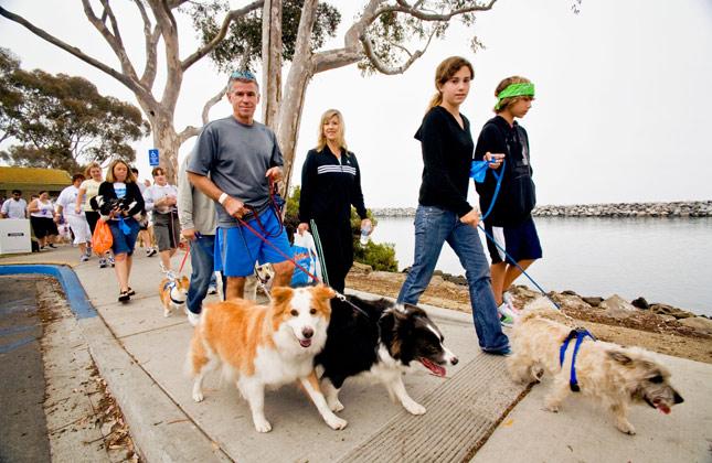 Can Dog Participate In Run Walk