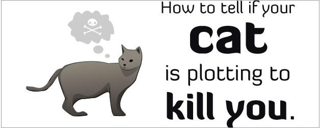 oatmeal cat plotting to kill you