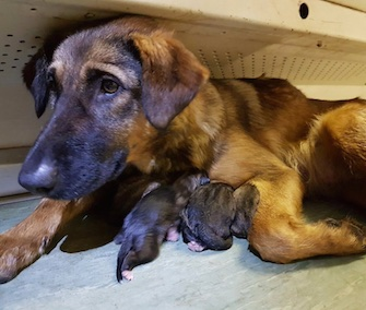 A stray dog wandered onto a metro car in Moscow to give birth to nine puppies.