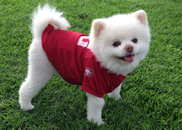 Cupid wearing 49ers jersey