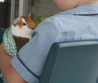 A child holds one of the guinea pigs used in the study.