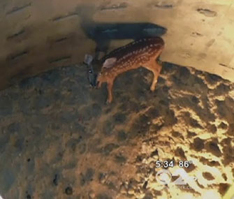 Emergency workers rescued a fawn from a 20-foot manhole.