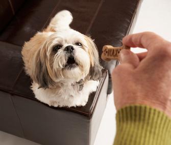 Dog begging for treat