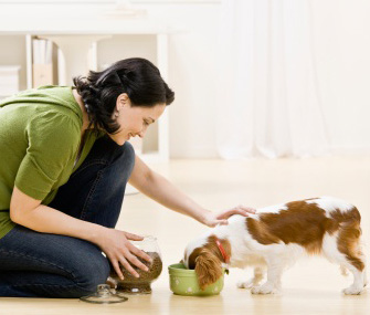 Pet sitter feeding puppy