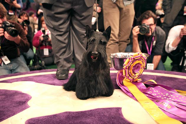 2010: Sadie the Scottish Terrier