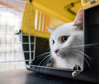 Cat in crate