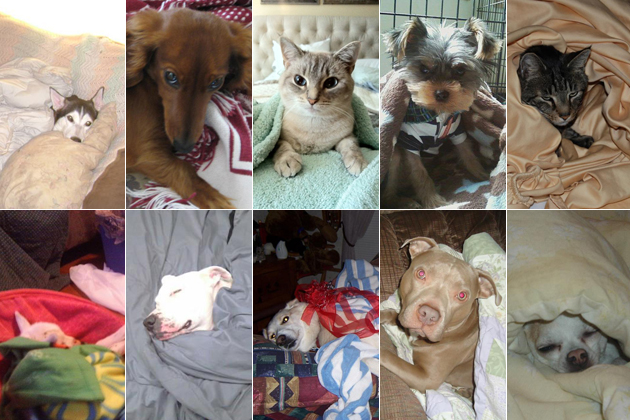 10 Blanket-Loving Dogs and Cats