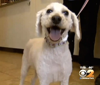 Easter the dog was rescued from a New Jersey ravine two weeks ago.