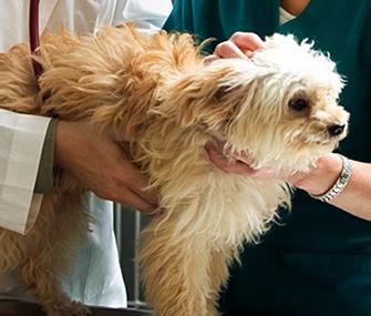 Dog Armpit