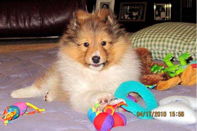 Cody Cute Pet of the Week 11-11-11