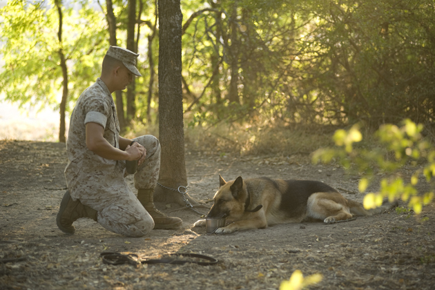A training aide dog and his handler-in-training start the day enjoying the shade.