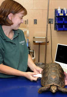 vet and turtle