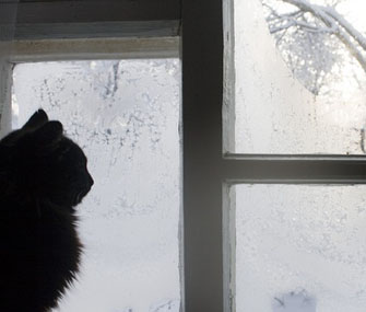 Cat looking out window on wintry day