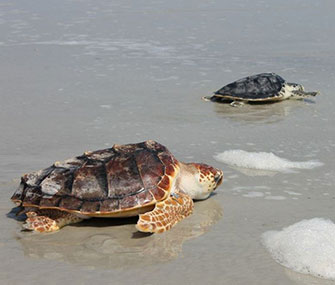 """""""I'll race you,"""" reads the caption of this photo posted by the National Aquarium."""