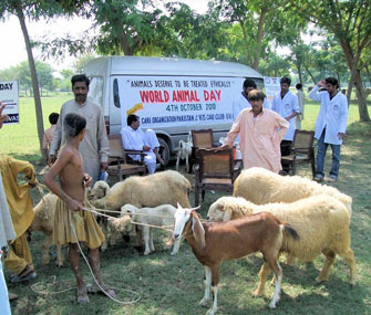 Free veterinary treatment camp in Pakistan