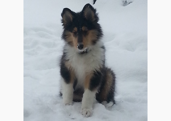 Puppies poses in snow.