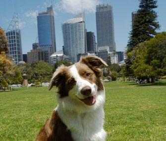 Dog in city park