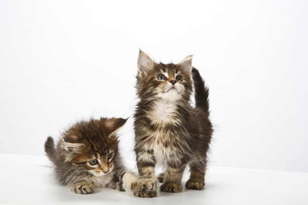 Meet 9 Cat Breeds Who Crave Affection