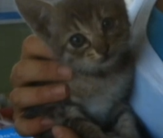 Love the kitten is recovering after a 1,000-mile ride in the engine of a Honda Fit.