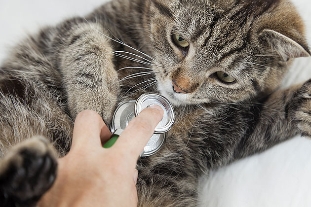 Have Your Vet Check Your Kitten's Health