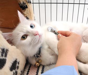 Vet caring for cat