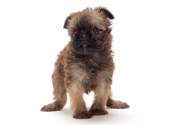 11 Tiny Dogs Under 15 Pounds Who Stay Cute and Small