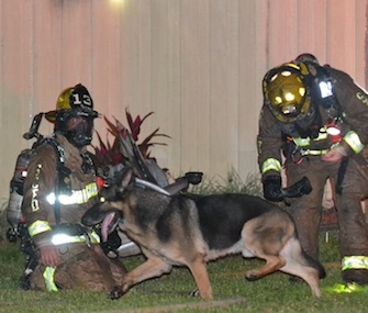Maxx, a German Shepherd, led firefighters to two young children in his family's burning home.