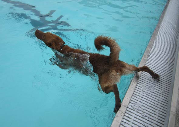 Dog at Paws in the Pool