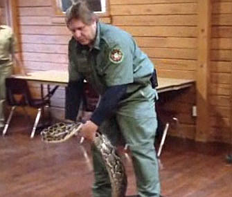 Officials collected a 12-foot Burmese python in Connecticut.