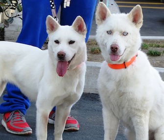Bomi, left, stands with her pal, Miley, who was also rescued by The Fuzzy Pet Foundation.