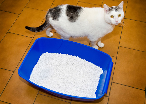 Can Dogs Use Kitty Litter