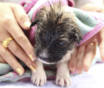 Puppy being toweled off after a bath